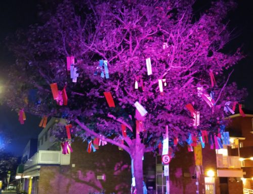 Last Chance to see the Rainbow Tree at Blackheath Standard