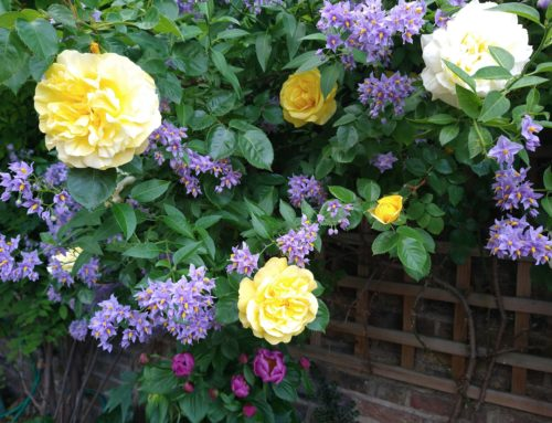Greenwich and Bexley Open Gardens Festival 2021